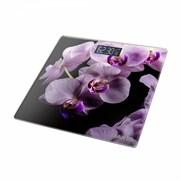 Весы Marta МТ-1676 орхидея